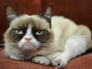 internet-famous-grumpy-cat-just-landed-an-endorsement-deal-with-friskies
